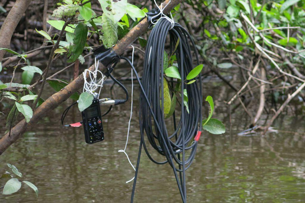 underwater Sound Recordings Amazonas Columbia