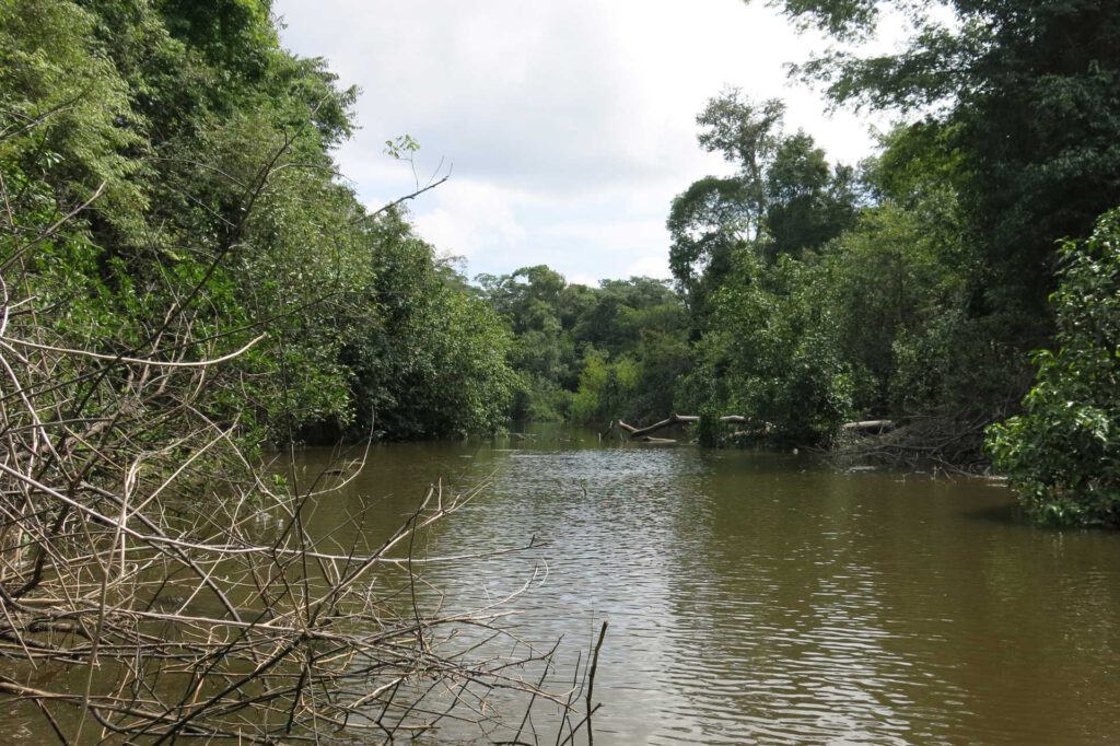 Amazonas, Seitenarm